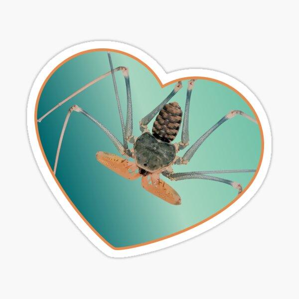 Amblypygi love - Acanthophrynus coronatus Sticker
