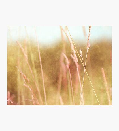 Summer Grass 28 Photographic Print