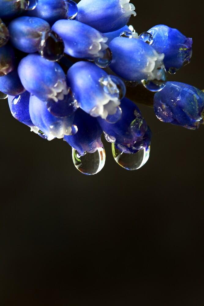 """Blue Bells"" by Husky"