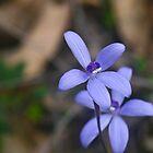 Western Australian Orchids by pennyswork