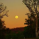 Kimberley Moon , Victoria River Northern Territory . Australia by Virginia  McGowan
