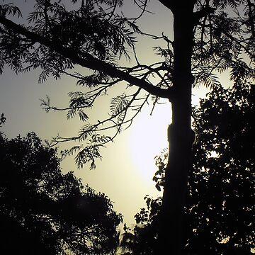 Just a Tree in Mooloolaba by AlexJeffery