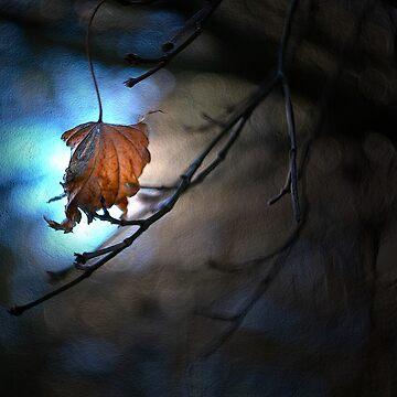 One Leaf left on the Tree by AlexJeffery