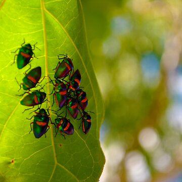Bugs Resting Underneath a Leaf by AlexJeffery