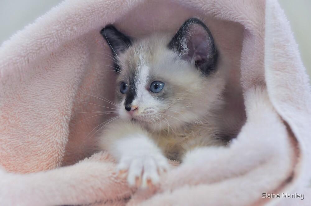 Cutie in a Blanket  by Elaine  Manley