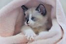 Cutie in a Blanket  by Elaine Manley