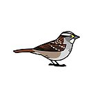 White-throated Sparrow (White-striped) by KeesKiwi