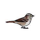 Copy of White-throated Sparrow (Tan-striped) by KeesKiwi