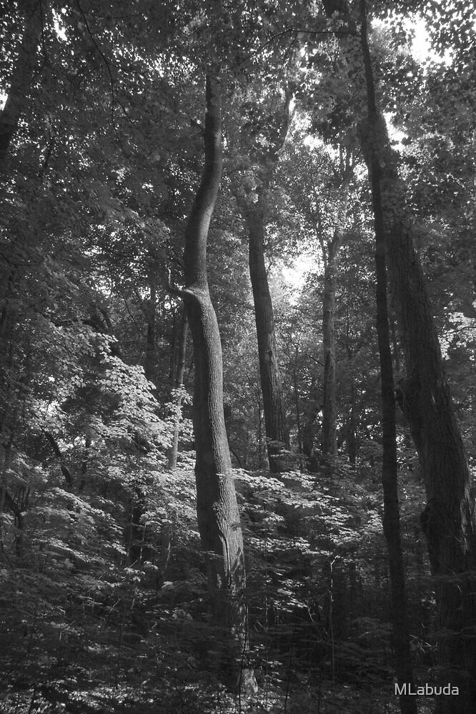 The Grandeur Of Nature by MLabuda