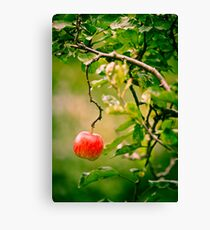 OnePhotoPerDay Series: 273 by L. Canvas Print