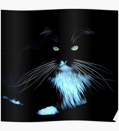 Whiskers in the dark Poster