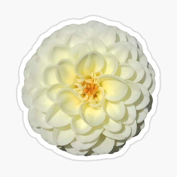 Dahlia blanc Sticker