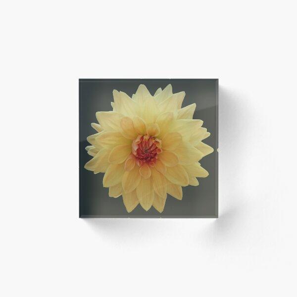 Yellow dahlia Acrylic Block