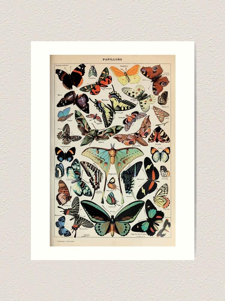 Alternate view of Adolphe Millot papillons pour tous Art Print