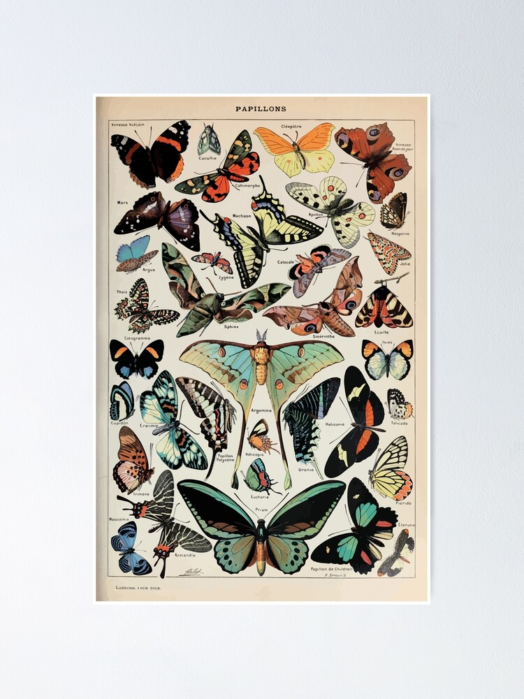 Alternate view of Adolphe Millot papillons pour tous Poster