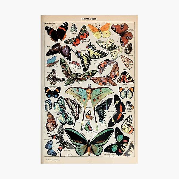 Adolphe Millot papillons pour tous Impression photo