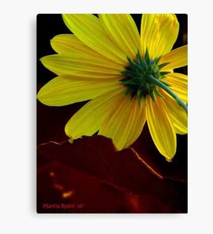 Backside Canvas Print