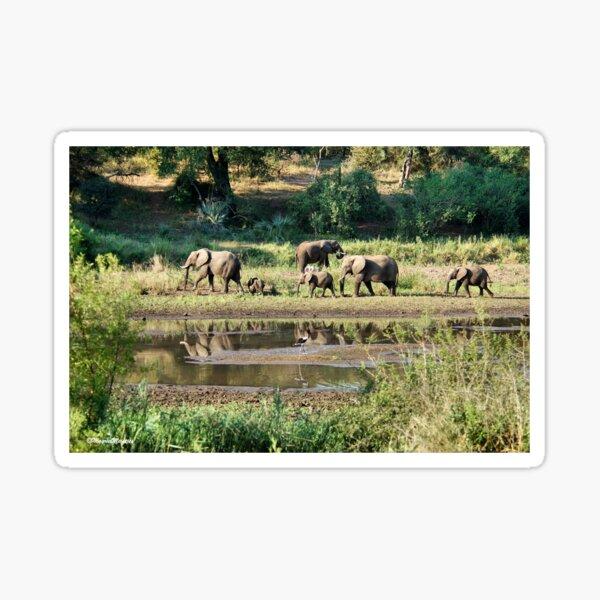 ELEPHANT REFLECTIONS - KRUGER NATIONAL PARK Sticker