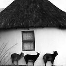 Rural Shelter by trobe