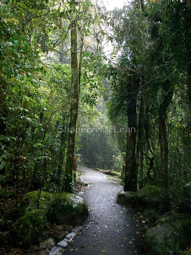 Rainforest Walk by Shannon McLean