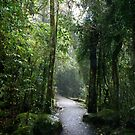 Rainforest Walk by Shannon Kennedy