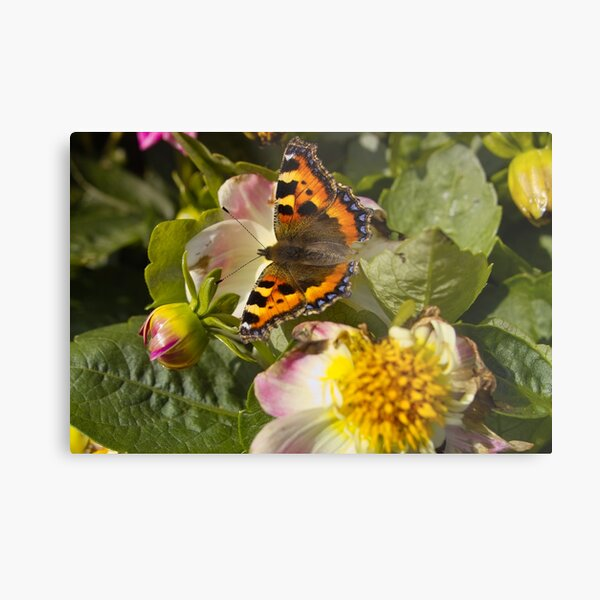 Butterfly Fly Away Metal Print