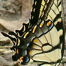 Beautiful Tiger Wings by catherinemhowl