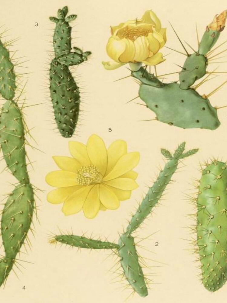 Vintage Botanical Cacti by bluespecsstudio
