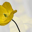 Poppy's by Susan P Watkins