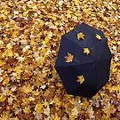 Leaf Fall Shower by David Piszczek