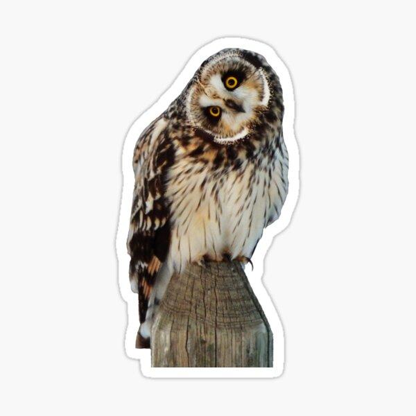 Short-Eared Owl Sticker