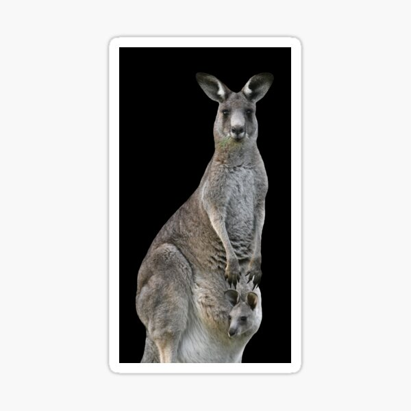 Kangaroo with joey looking out of pouch 2 Sticker