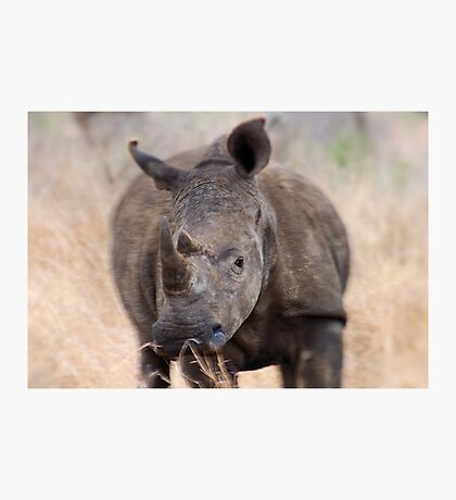 ON A CHARGE - THE WHITE RHINOCEROS – Ceratotherium simum Photographic Print