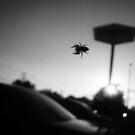 Surprise Arachnid  by DearMsWildOne