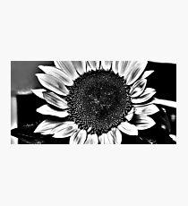Sun Flower Suit Photographic Print