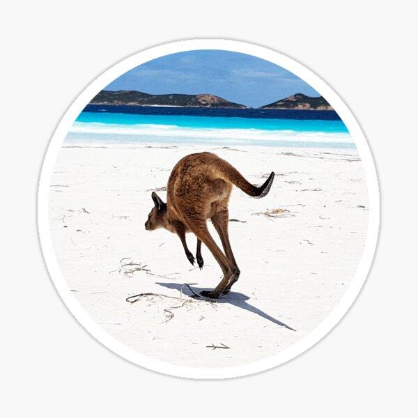 Kangaroo Lucky Bay Sticker