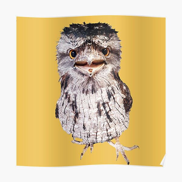 Bird Tawny Frogmouth Poster