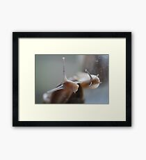 Just saying hello Framed Print