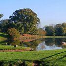 Cotebrook Shire Horse Centre Lake in Autumn by AnnDixon