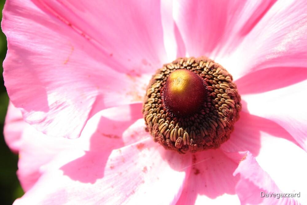 flower attachment by Davegazzard