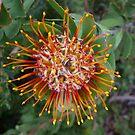 Stripey Flower by PurpleDonna