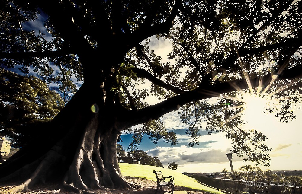 Have a seat beneath the fig tree by Adriano Carrideo