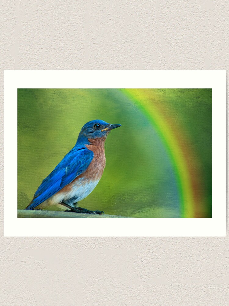 Somewhere Over The Rainbow Bluebirds Fly Art Print By Miracles Redbubble