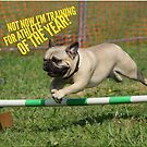 """Funny Pug Shirt, """"Not Now I'm Training for Athlete of the Year!"""" by M. I. Speer"""