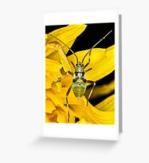 Aphid Greeting Card