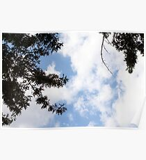 Clouds enclosed by Trees Poster