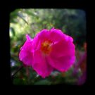 Garden TTV Triptych by Mark Wilson