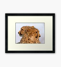 Two Headed Cheetah? Framed Print