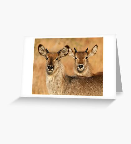Devilish Waterbucks Greeting Card