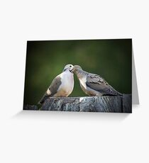 Mourning Dove Kisses Greeting Card